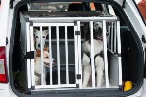 Sind Sie mit Katze oder Hund im Auto unterwegs, gelten die Vorschriften zur Ladungssicherung.